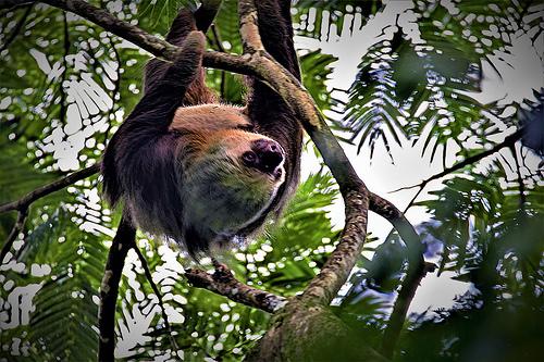 Tortuguero National Park (Photo: petershaw4 on Flickr)